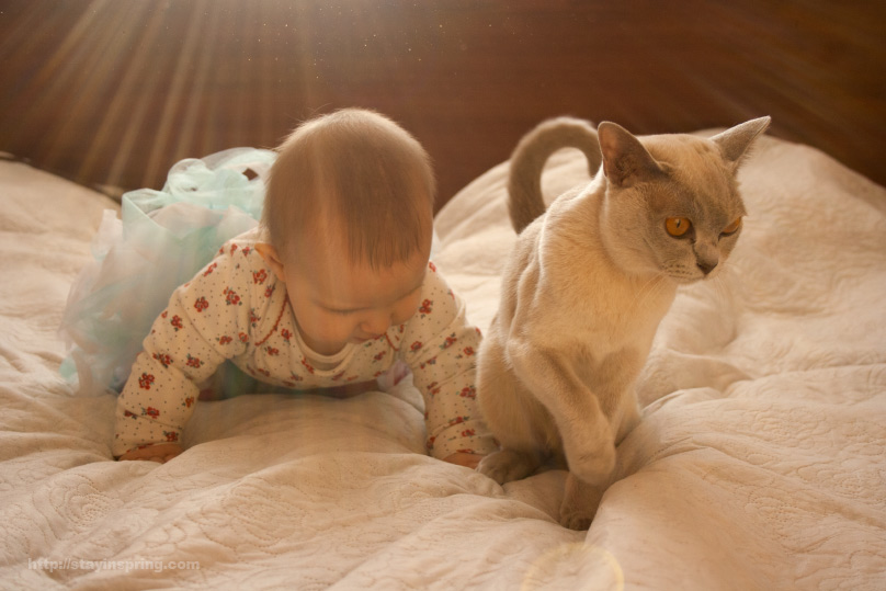 Baby and Burmese cat