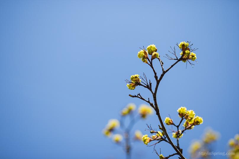 Весна добралась до Риги!