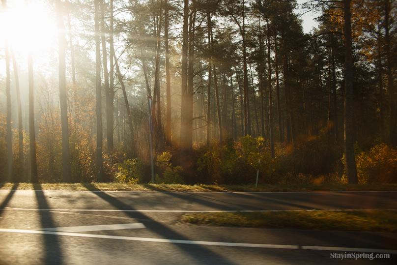 поездка на машине утром